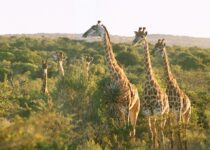 South Africa 4